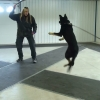 Jean & Ruger tug play