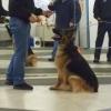 Kaza dumbell training